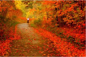 fall-leaves_zps6d81f306